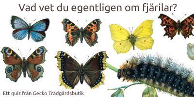 Vad vet du om fjärilar?