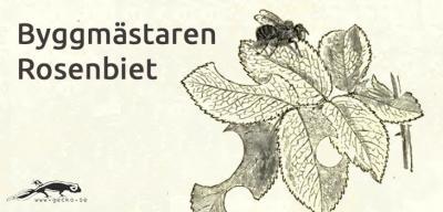 Solitärbi Rosenbi Byggmästare