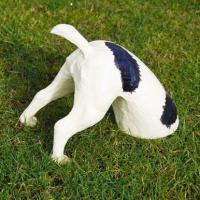 Hundrumpa Grävande hund