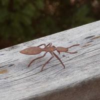 Rostig myra