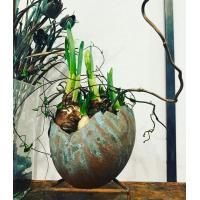 Strutsägg för plantering, koppar