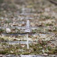 svamp stengods keramik trädgård